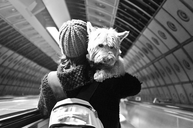Travel With Pets - A Travel Guide, YOEXPLORE