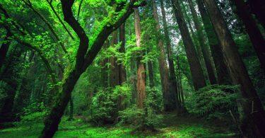 makanan di hutan - YOEXPLORE.co.id