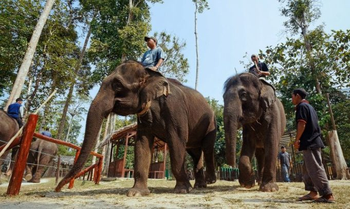 tempat konservasi gajah - YOEXPLORE.co.id
