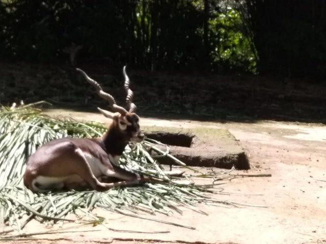 8 hal yang bisa dilakukan di taman safari bogor - Panduan Traveling YoExplore