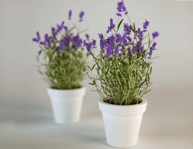 tanaman dalam kamar tidur - YOEXPLORE.co.id