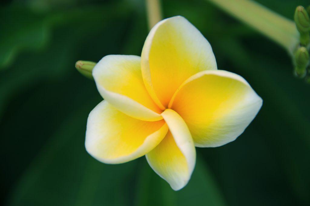 Fakta Bali - YoExplore