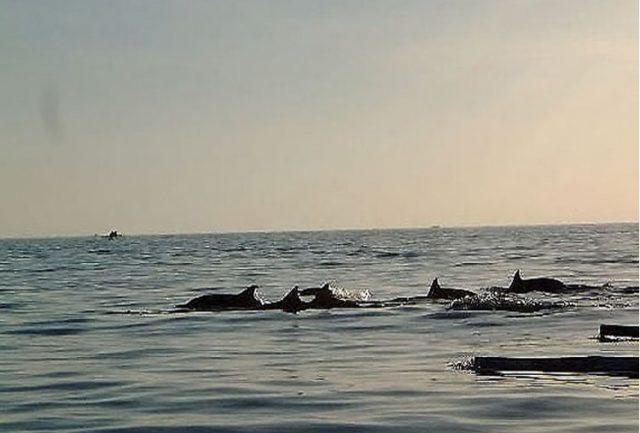 snorkeling di lovina - panduan traveling di bali, yoexplore - yoexplore