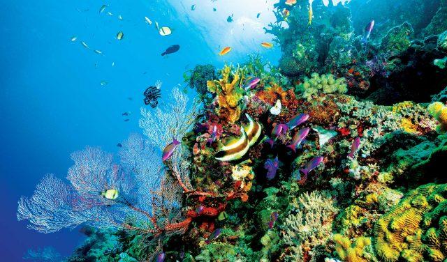 tempat snorkeling terbaik di dunia - yoexplore.co.id -yoexplore