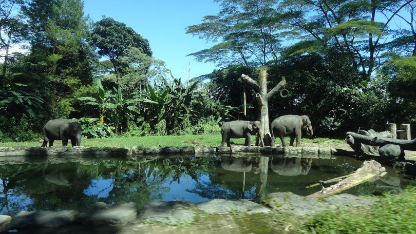 Family Trips Zoo