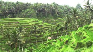 family trips to Bali