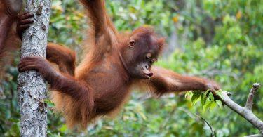 fauna asli indonesia - yoexplore, liburan keluarga - yoexplore.co.id