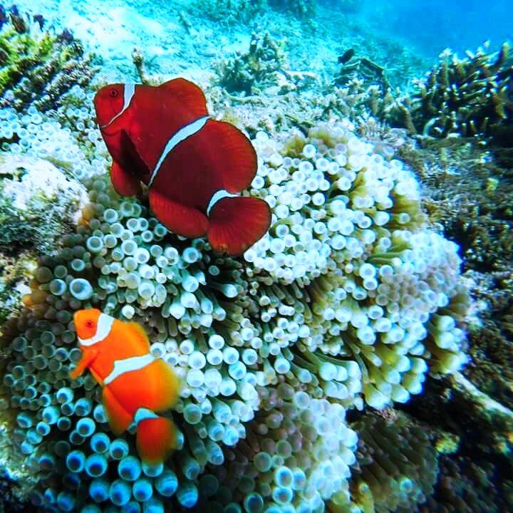 Bali snorkeling spots