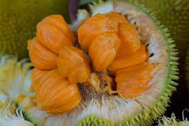 buah langka di Indonesia - yoexplore, liburan keluarga - yoexplore.co.id