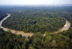 hutan terluas di indonesia - yoexplore, liburan keluarga - yoexplore.co.id