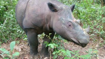 hewan asli indonesia - yoexplore, liburan keluarga - yoexplore.co.id