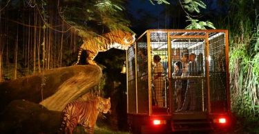 taman safari malam bogor - yoexplore, liburan keluarga - yoexplore.co.id