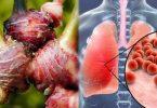 tanaman herbal untuk cegah corona - yoexplore, liburan keluarga - yoexplore.co.id