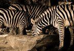 paket wisata taman safari - yoexplore, liburan keluarga - yoexplore