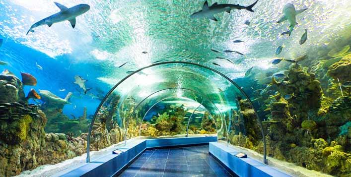 Fakieh Aquarium Jeddah Raja Salman