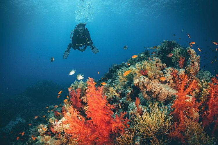 Laut Merah Arab Saudi