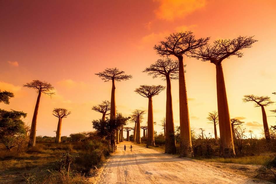explore afrika